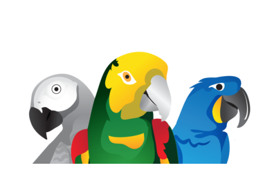 Available Parrots