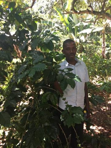 artisan with coffee plant