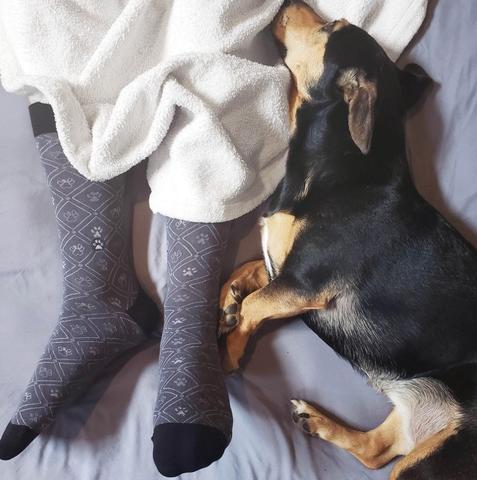 dog over socks with dog