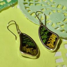 Silver Tree Designs Butterfly Wing Earring - Rainbow Metallic Chrysiridia Rhipheus & Sunset Moth