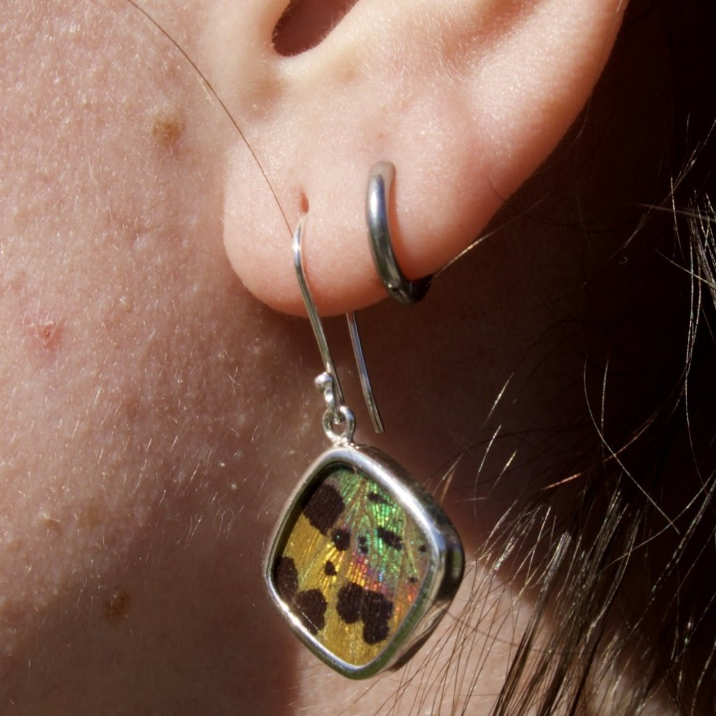 Silver Tree Designs Butterfly Wing Square Earrings  - Chrysiridia Rhipheus/Sunset Moth