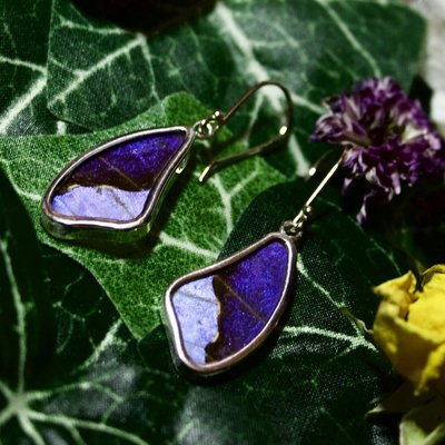 Silver Tree Designs Butterfly Wing Large  Wing Earrings Blue Morpho/Morpho Sulkowskyi