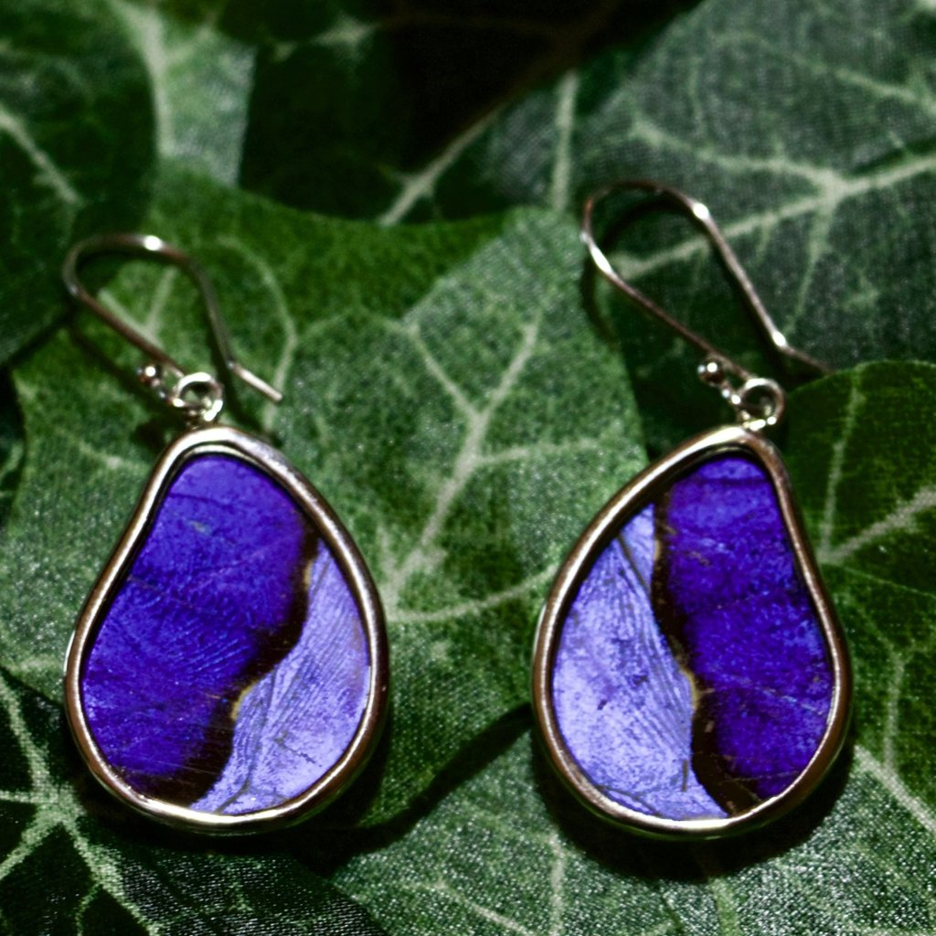 Silver Tree Designs Butterfly Wing Teardrop Earrings - Blue Morpho / Morpho Sulkowskyi