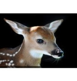Streamline Art Baby Fawn Canvas Art
