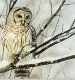 Owl On Snow Branch  Christmas Card 20