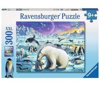 Polar Animals Gathering