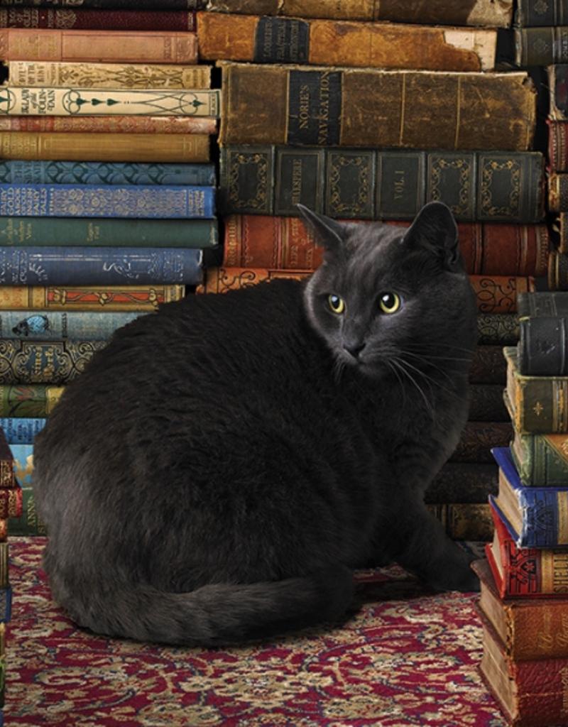 Cobble Hill Library Cat 1000 piece puzzle