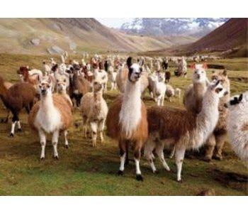 Llamas 1000pc puzzle