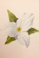 Tamara S Watercolour Beginners Level One Fri Feb 14 - Fri March 6, 2020