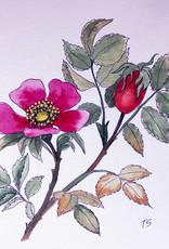 Tamara S Watercolour & Ink Dog-rose Tues Nov 17