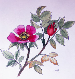Tamara S Watercolour & Ink Dog-rose Tues Nov 17