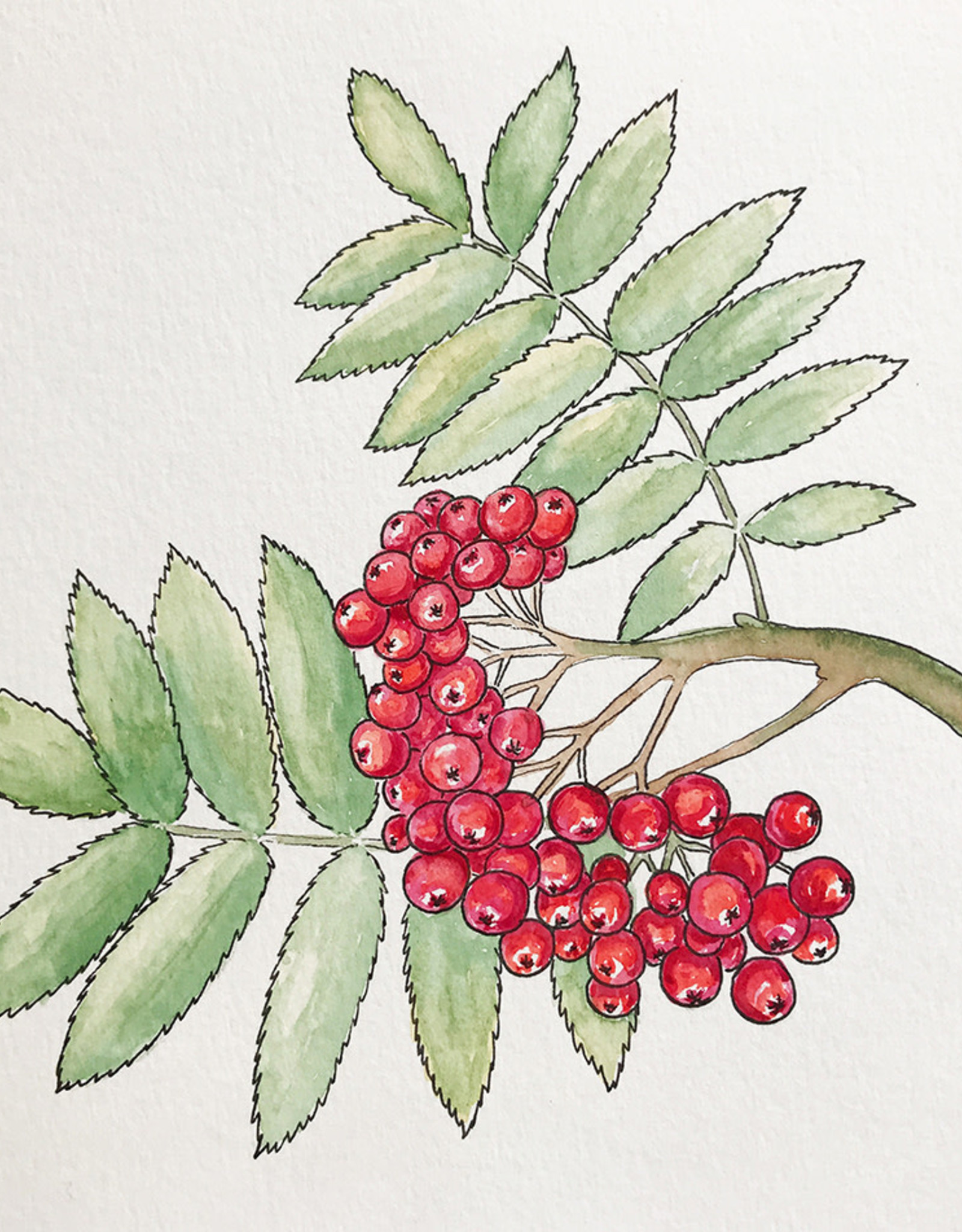 Tamara S W/C & Ink Rowan Berries Wed Dec 9 11:00 am to 12:30 pm
