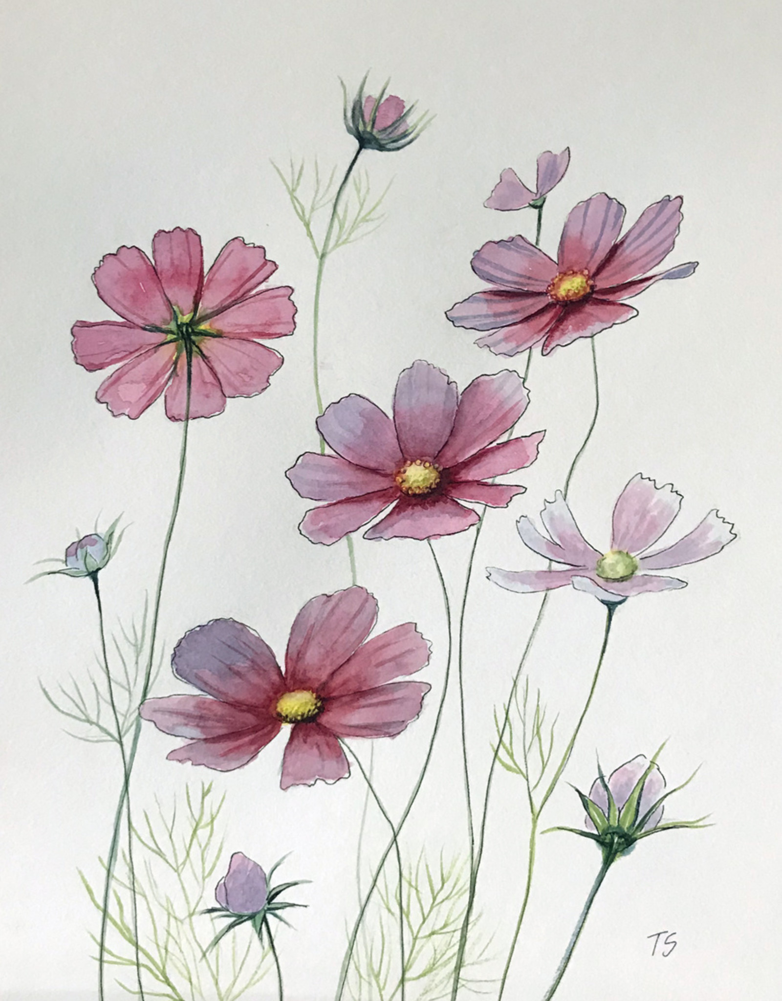 Tamara S Watercolour Art Class Cosmos Flowers Wed Jan 27 -1:00 pm