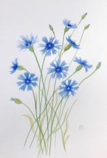Tamara S Watercolour Art Class Cornflowers Wed Aug 18  4:00 pm to 6:00 pm