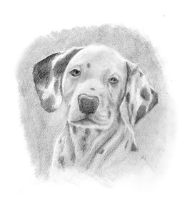 Nick W Drawing Art Class Animal Portraits Dogs Wed Oct 27 to  Nov 17 1:00 to 3:00 pm