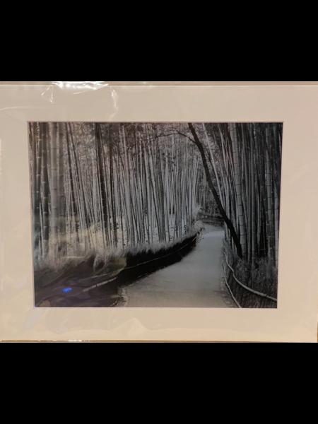 "Circe Baumgartner Circe Baumgartner Metallic Giclee Print Bamboo Forest Kyoto Japan 11x14"""