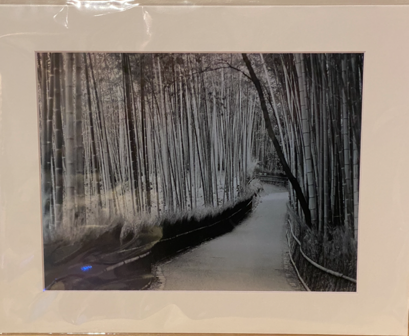 "Circe Baumgartner Metallic Giclee Print Bamboo Forest Kyoto Japan 11x14"""