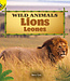 Lions: Leones (Spanish) Board book