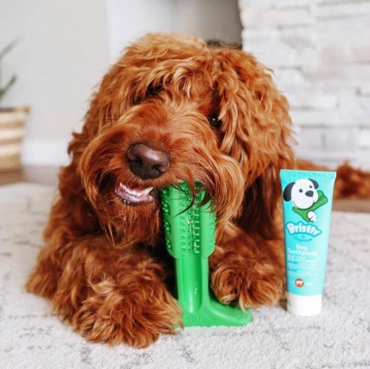 Empower Pet Bristly  DIY Toothbrush, Medium