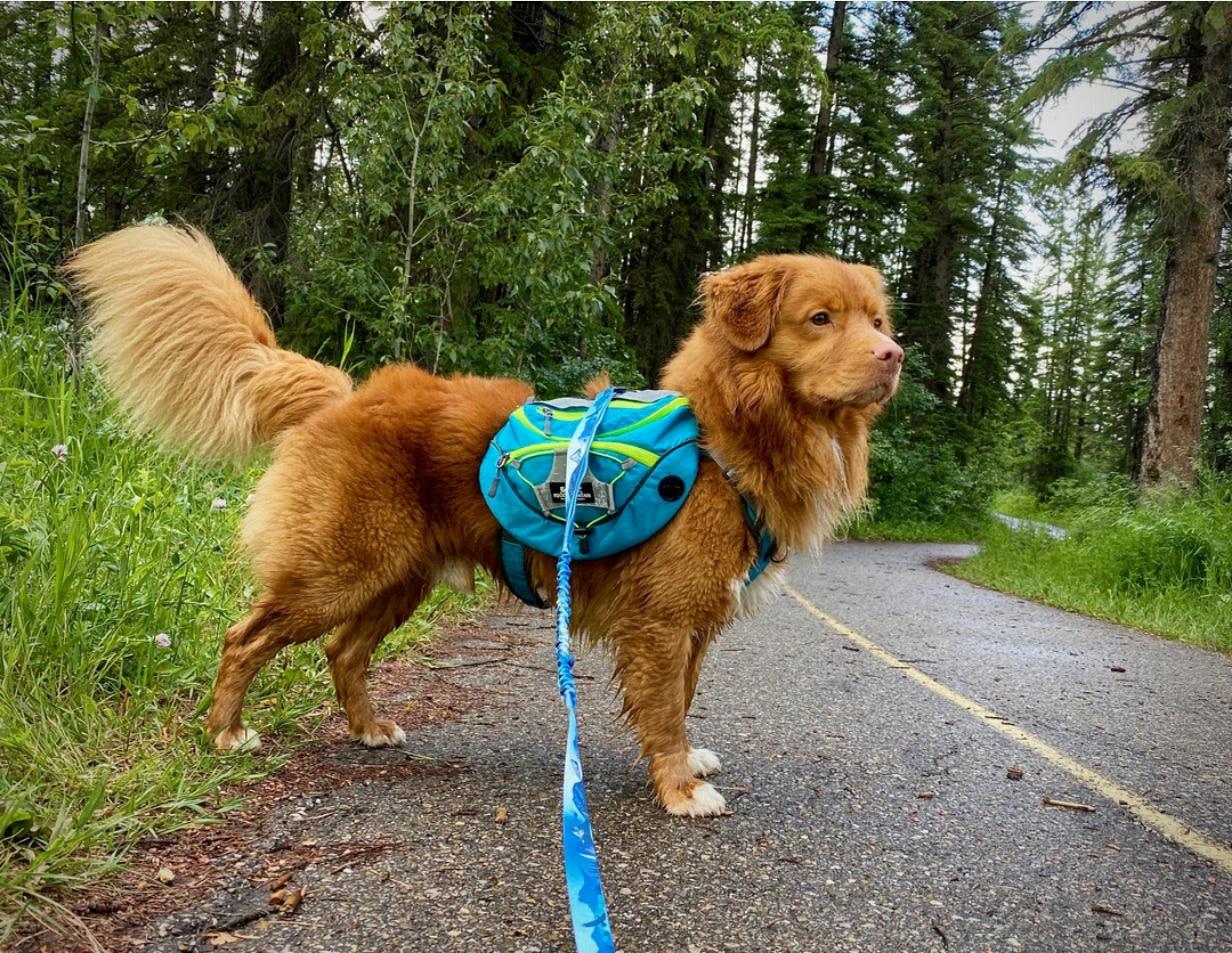 Rocky Mountain Dog Rocky Mountain Dog Backpack