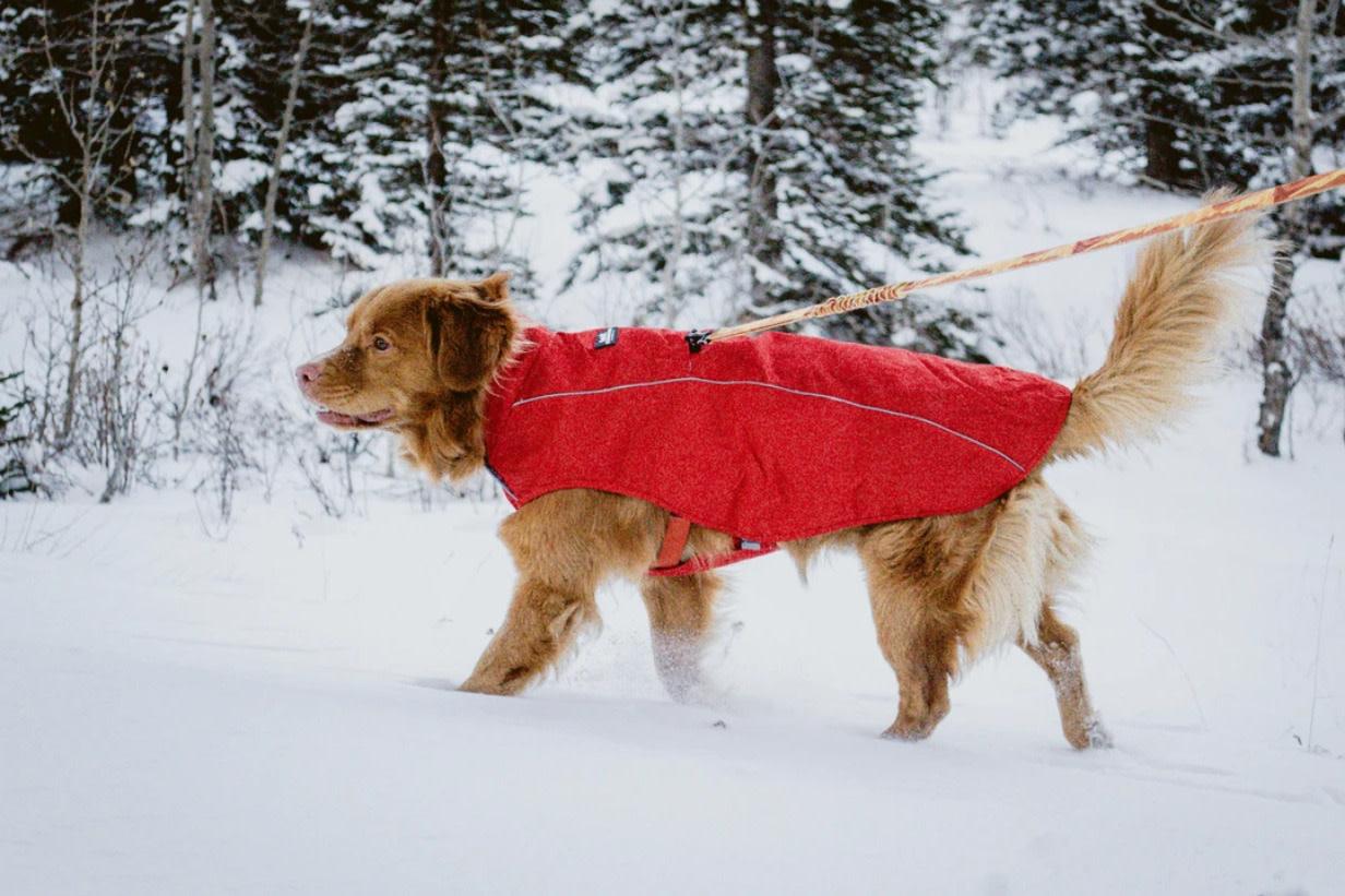 Rocky Mountain Dog Rocky Mountain Dog Winter Jacket
