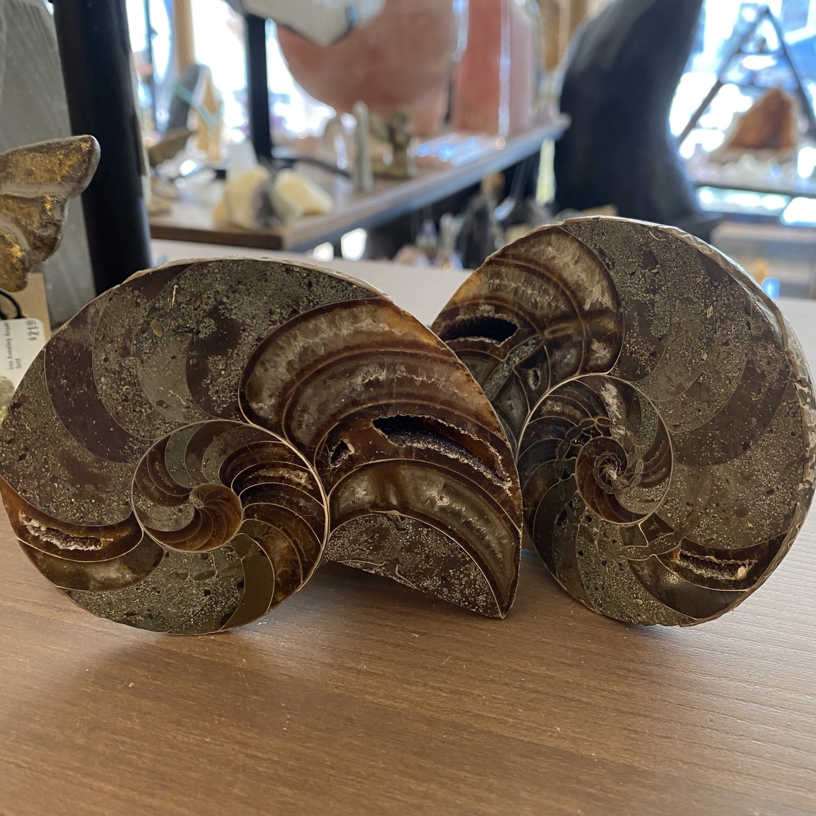 Ammonite Pair (2 pieces)