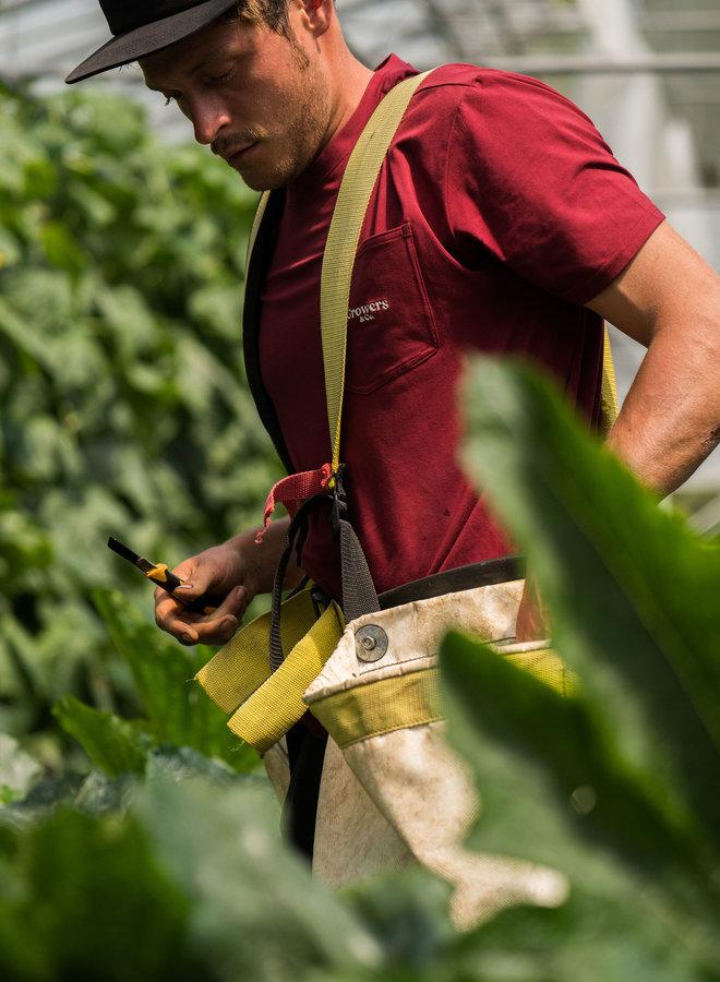 T-Shirt à Poche San Marzano Rouge Vin Homme