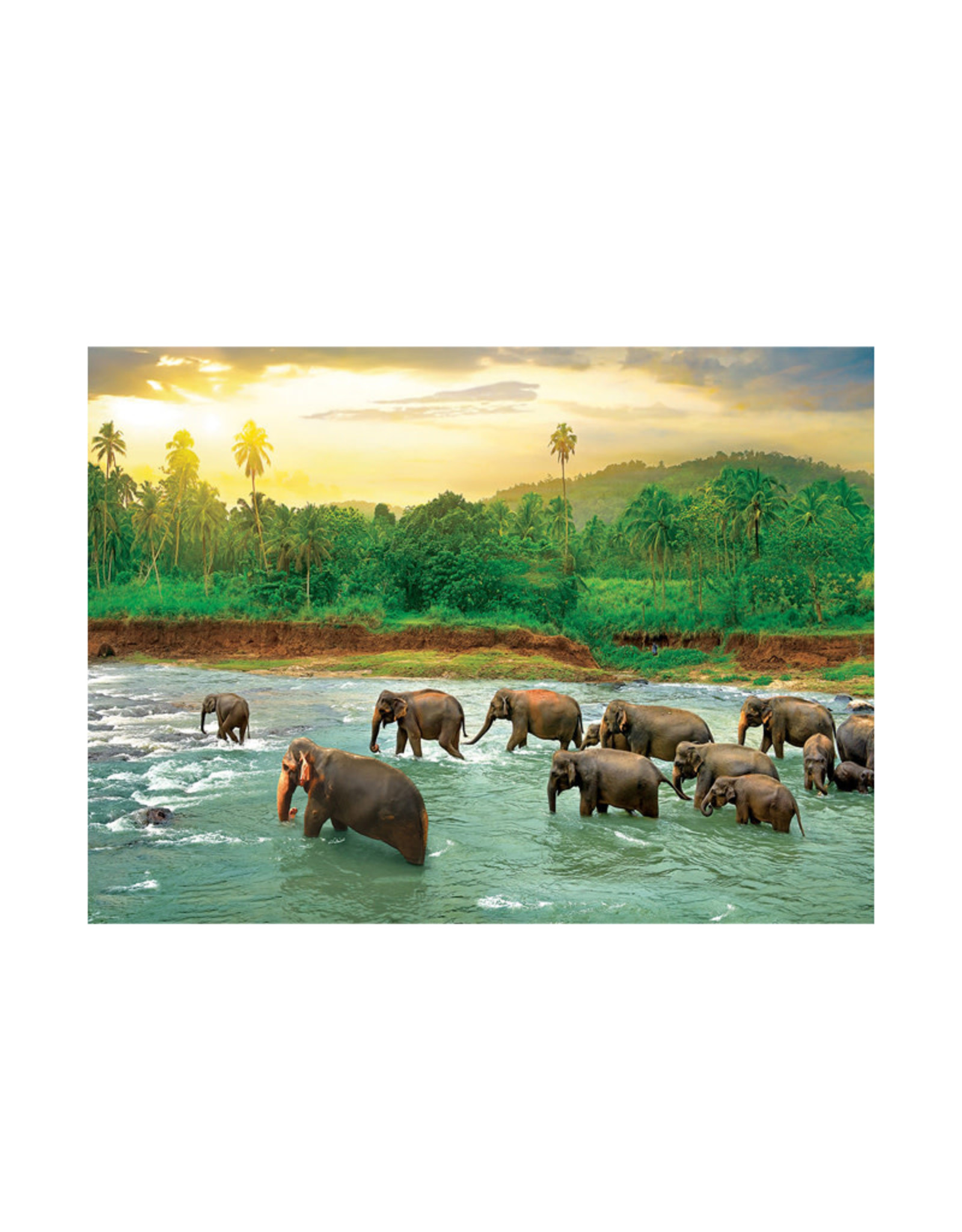 Eurographics Rainforest Puzzle 1000 PCS
