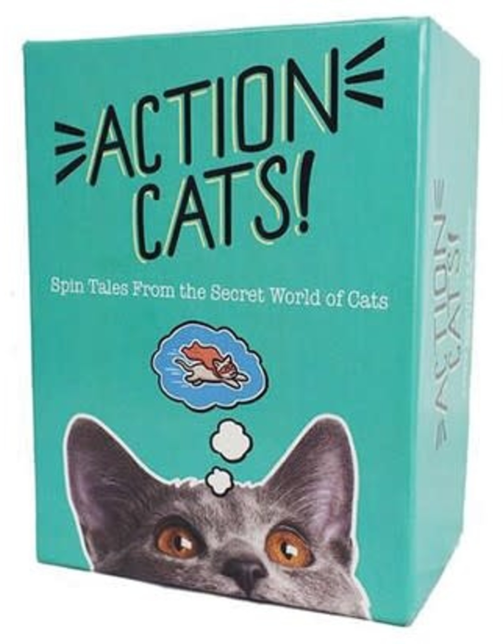 Miscellaneous Action Cats!