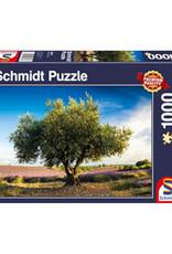 Schmidt Olive tree in Provence 1000 PCS