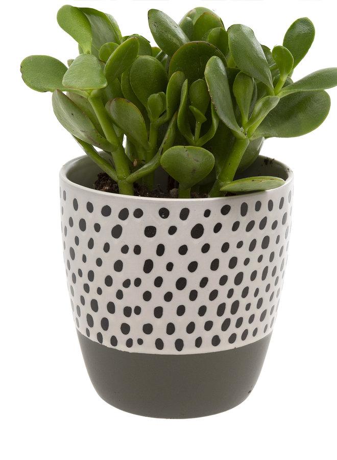 Polka Dot Pot - Grey