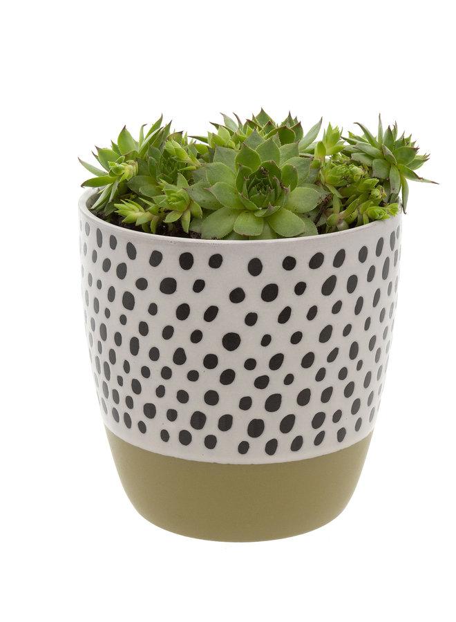 Polka Dot Pot - Olive