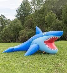 Mister Shark Outdoor Fun-2