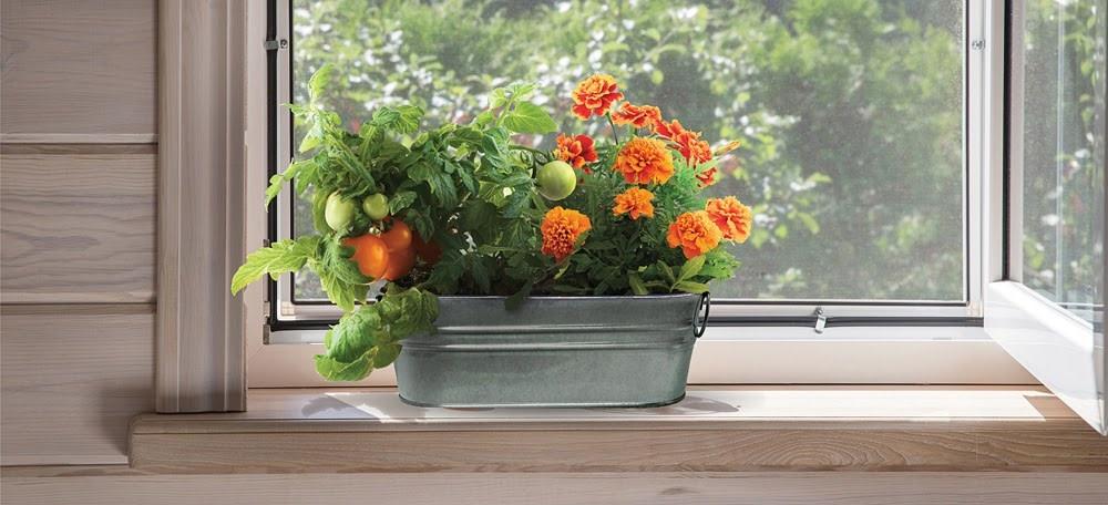 My First Garden Windowsill Grow Kit by Buzzy-3