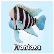 "Green Pleco 12"" Frontosa"