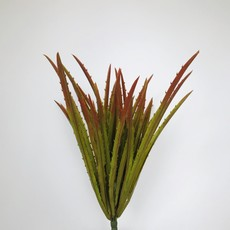 Fish Gallery Agave Grass Red/Green