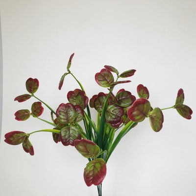 """Fish Gallery Lily Bush Green/Red 17"""""""