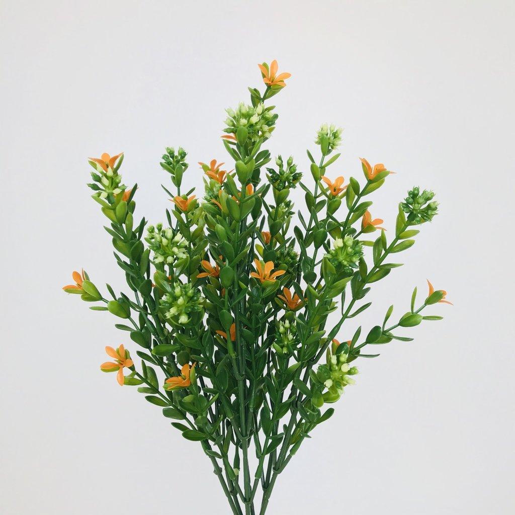 Orange Burst Flowers