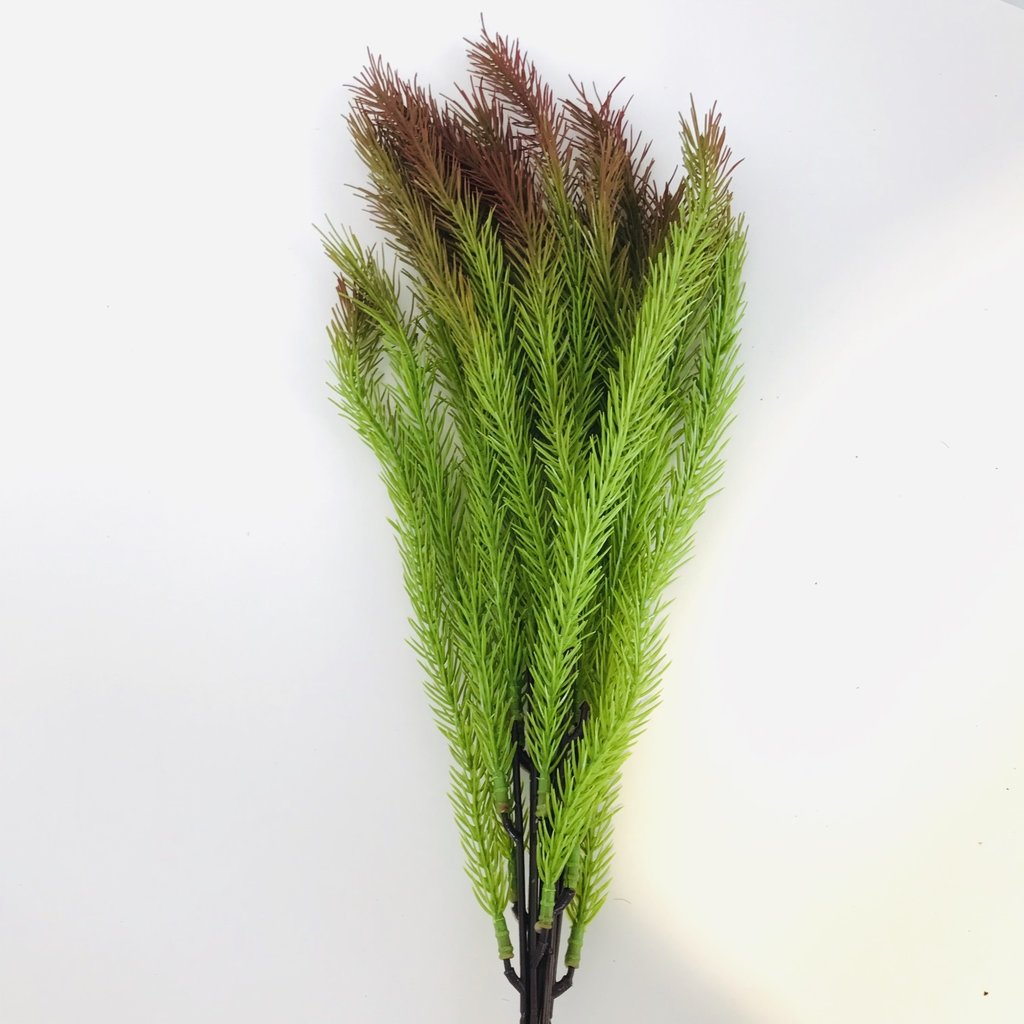 Fish Gallery Pine Grass Red Tip