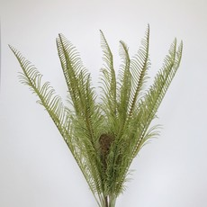 Prehistoric Fern
