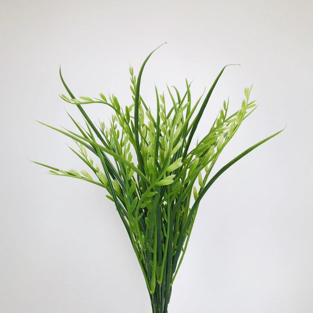 Seed Grass Green