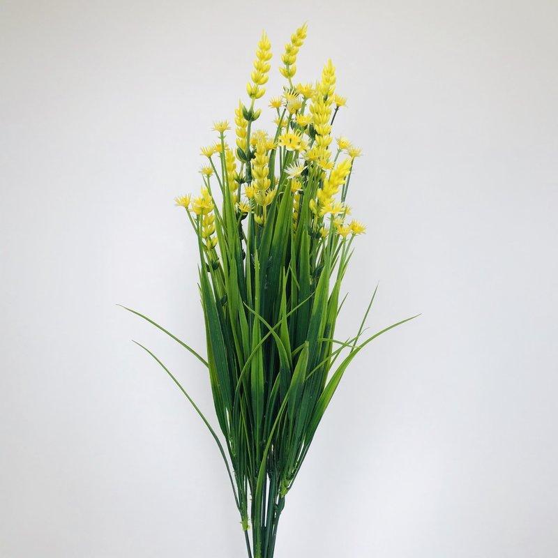 Fish Gallery Yellow Flowers Shrub