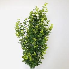 Green Bacopa