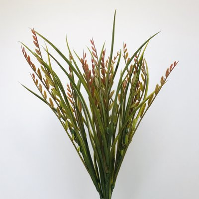Seed Grass Red