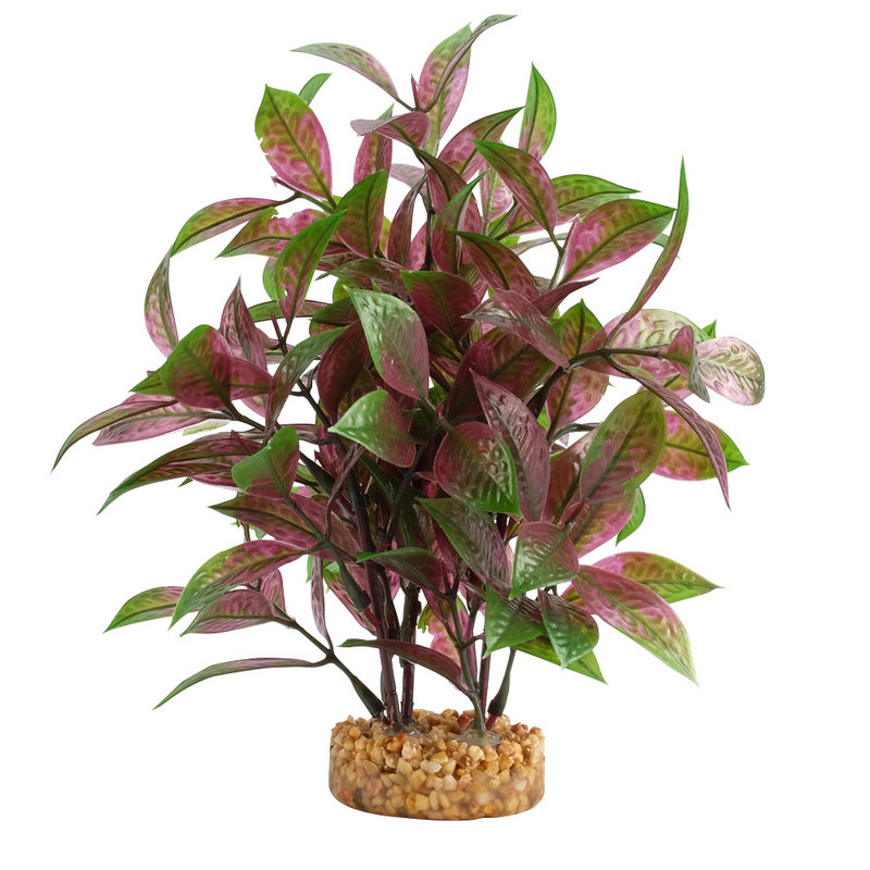 """Hagen Products Fluval Broad Leaf Red Ludwigia 8"""""""