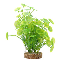 Hagen Products Fluval Yellow-Green Lysimachia 8""
