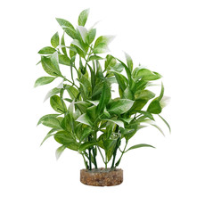 """Hagen Products Fluval White-Tipped Ludwigia 8"""""""