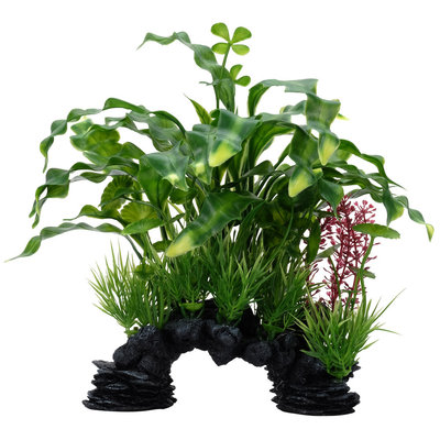 """Hagen Products Curly Aponogeton Mix / Decore 10"""""""
