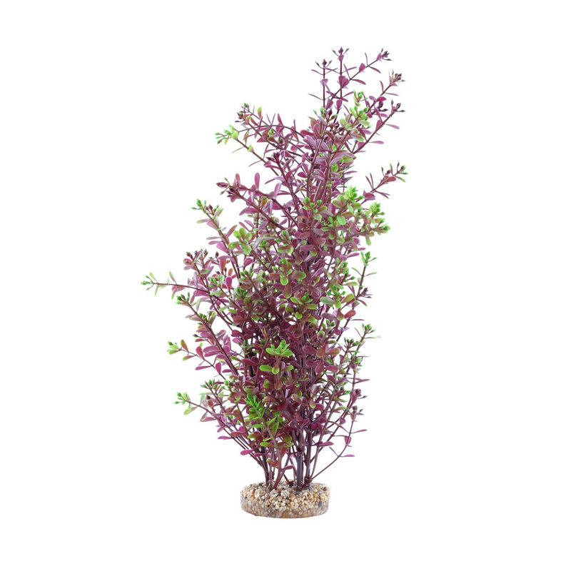 """Hagen Products Fluval Red Rotala 10"""""""