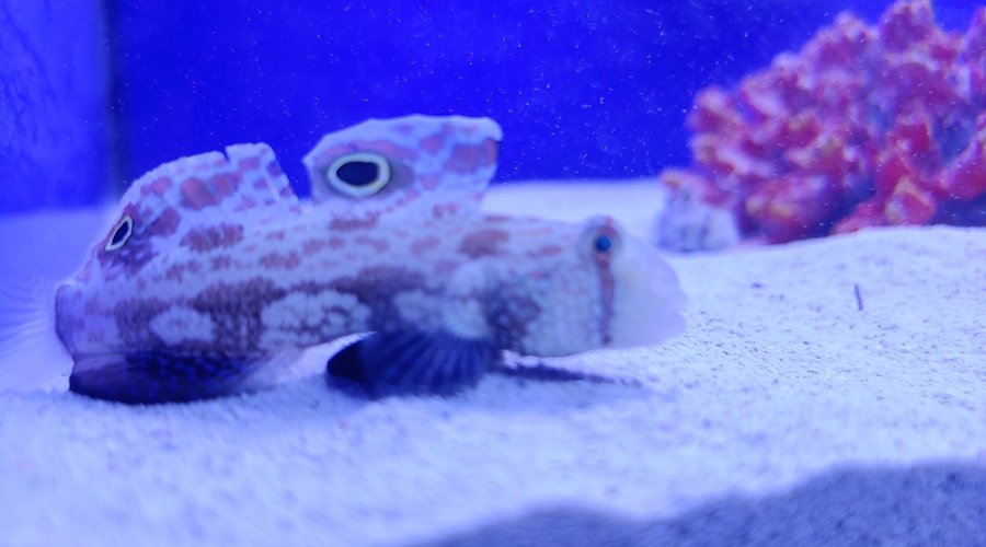Saltwater Fish Now in stock at Fish Gallery Dallas! 11/21